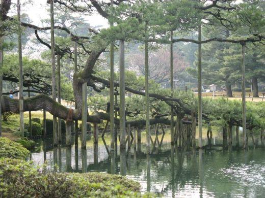 Bassin aquatique du jardin japonais de kenrokuen for Jardin kenrokuen